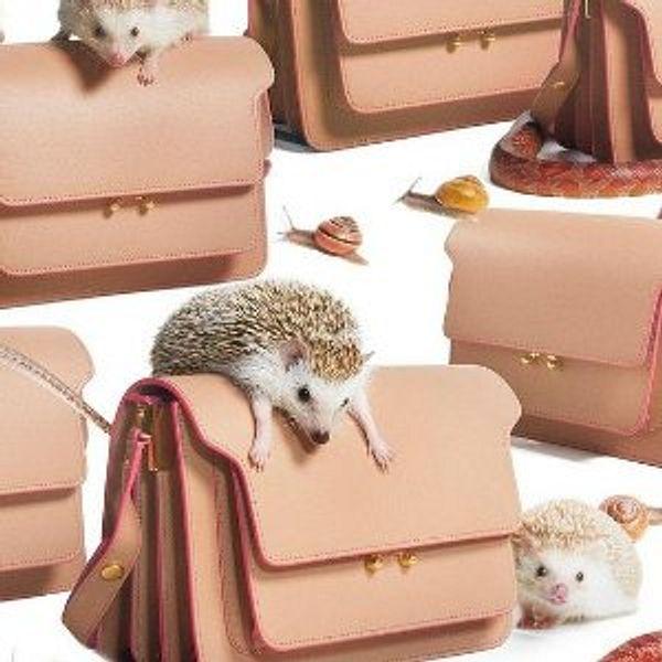 Coltorti Boutique Marni Handbags