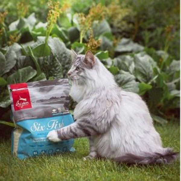 ORIJEN  Dog & Cat Food sale