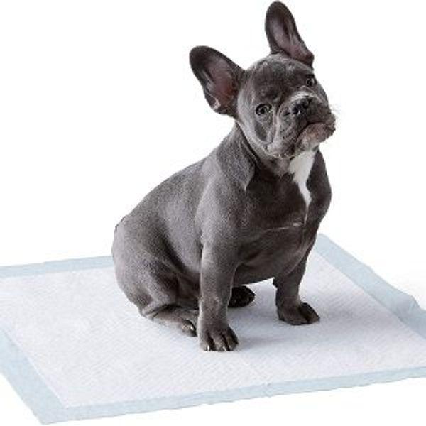 Amazon Basic  Basics pet supplies sale